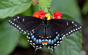 butterfly, macro, sit, beautiful girl