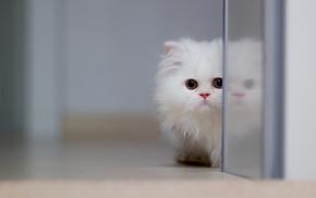 kitten, white, animals