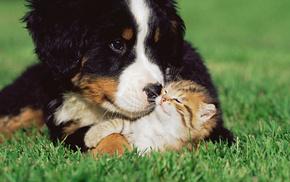 Собака, дружба, животные, трава, котенок
