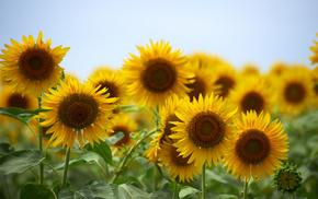 summer, nature, flowers