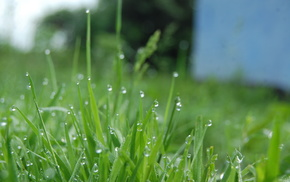 drops, grass, dew, green, beautiful