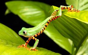 animals, frog