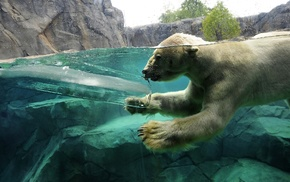 ныряет, вода, лёд, Белый медведь, скалы, животные
