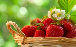 berries, strawberry, bloom, basket, delicious