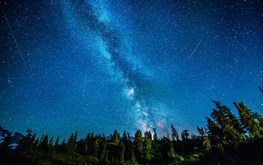forest, nature, Milky Way, stars, night