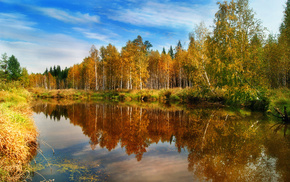 forest, nature, water, autumn