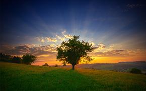 grass, summer, Sun, landscape, dawn