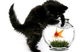 kitten, animals, cat