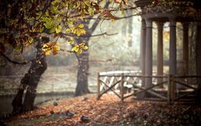 autumn, trees, park, leaves, nature