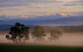 небо, облака, деревья, Природа, туман