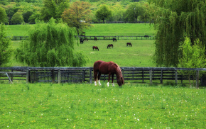 grass, spring, animals, horses