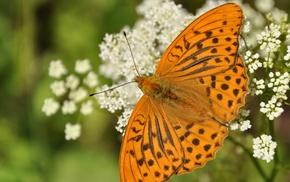 summer, wings, butterfly, macro