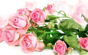 bouquet, flowers, roses, bokeh, drops