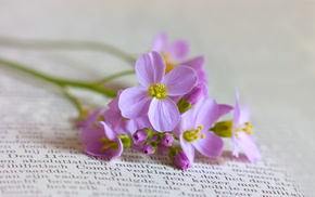 book, flowers
