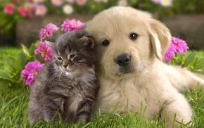животные, домашние животные, звери, собака и кошка