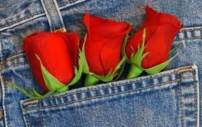 flowers, roses, bouquet