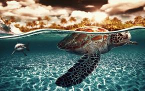 animals, underwater, shark