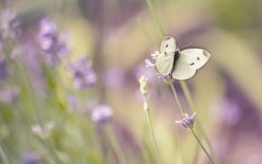 summer, flowers, macro, butterfly