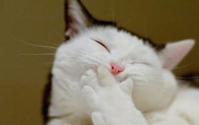 юмор, Смеющийся кот, животные