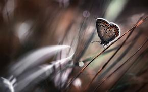 grass, butterfly, macro, bokeh