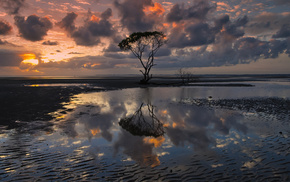 water, evening, tree, stunner, Australia