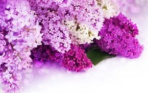 petals, flowers, bokeh
