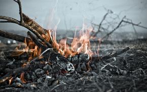 flame, fire, tree, stunner, smoke