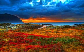 grass, mountain, coast, nature, flowers