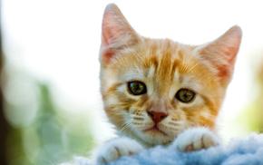 animals, kitten, macro