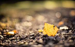 motion blur, bokeh, macro, leaf, stones