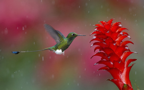 colors, bird, flower, photo, nature