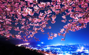 cities, Japan, sakura