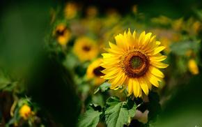 motion blur, summer, flowers, yellow