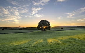 England, grassland, morning, tree, dawn
