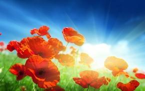 небо, поле, трава, цветы, Маки, красные