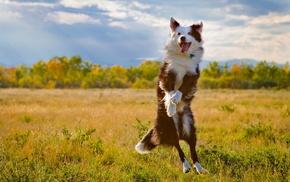 field, animals, dog, bounce