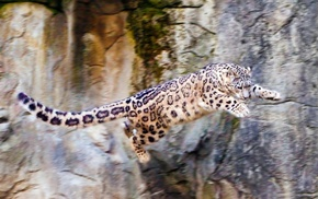animals, nature, bounce, rocks