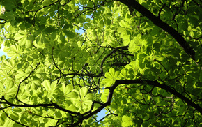 leaves, spring, branch, greenery, plant