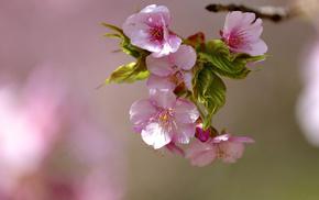 spring, flowers, macro, bloom, branch