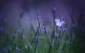 field, flowers, butterfly, macro, grass