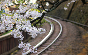 Japan, sakura, flowers, railway, twigs