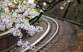 Japan, sakura, flowers, railway, twigs