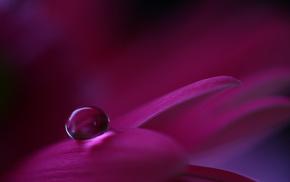 petals, macro, flower