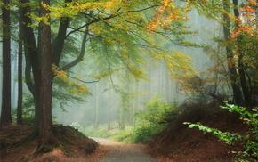 Лес, природа, деревья