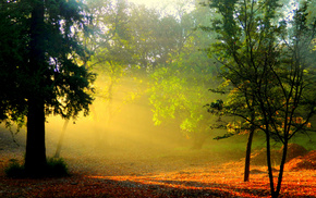 morning, forest, mist, rays, dawn