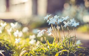bokeh, highlights, grass, motion blur, flowers