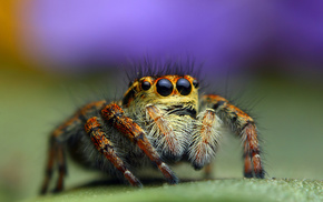 background, macro, animals, spider