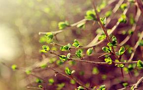 macro, twigs, leaves, spring, greenery