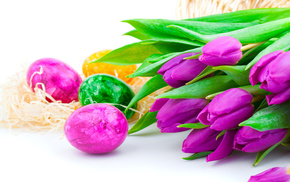flowers, tulips, holiday, spring