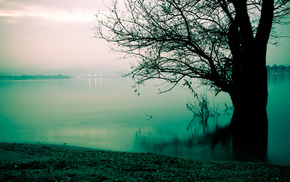mist, tree, morning, coast, lake